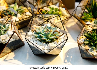 Succulent in the geometry glass terrarium