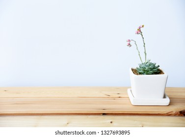 Succulent on wooden table