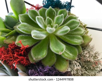 Succulent Ornamental Planter with Moss