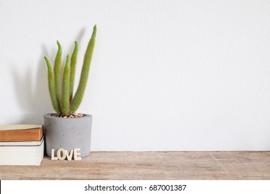 succulent plant in concrete pot on wooden shelf with copy space.cactus lover concept.