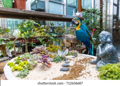 succulent plant garden and macaw