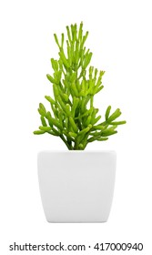Succulent plant on pot isolated on white