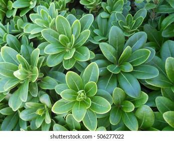 Succulent plant outdoor