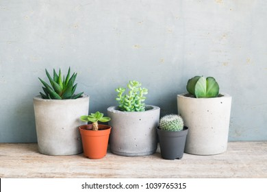 Succulent plant in pot. Lifestyle home decoration