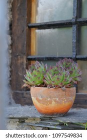 succulent plant in a pot put on an ledge of a window