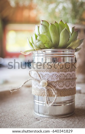 Succulent Plant Silver Tin Can Vase Stock Photo Edit Now 640341829