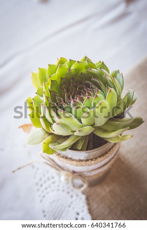 Succulent Plant Tin Can Covered Burlap Stock Photo Edit Now