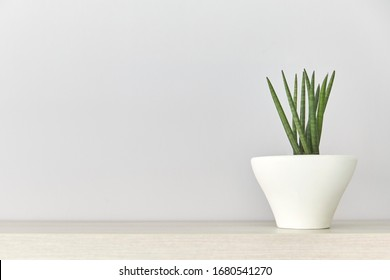 Succulent plant in a white pot on wood table, gray background