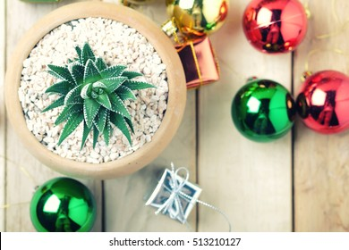 Succulent planted in pot with Christmas decoration - Vintage Filter.