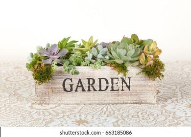 "Succulent plants arrangement in a wooden box ""garden"""