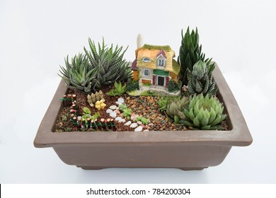 Succulent Arrangements Images Stock Photos Vectors Shutterstock