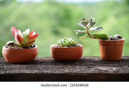 succulent plants and cactus on the wood table