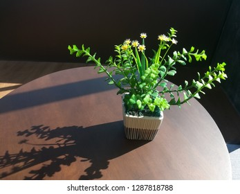 Succulent plants in ceramic pots on a brown wood table