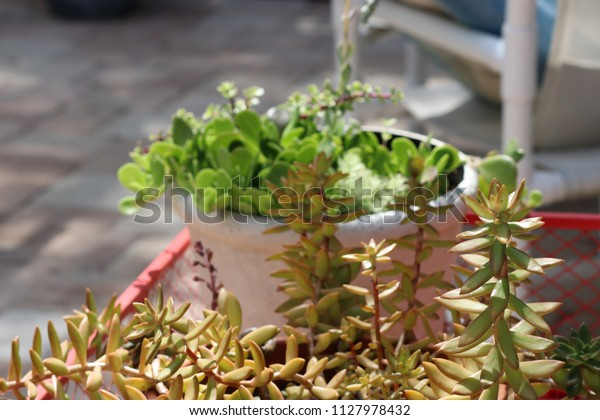 Succulent Plants Containers Patio Garden Royalty Free Stock Image