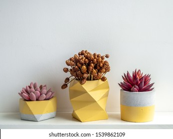 Succulent plants and dry flowers in modern yellow geometric concrete planters isolated on white background. Beautiful painted concrete pots.