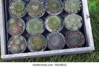 Succulent plants in a flower box
