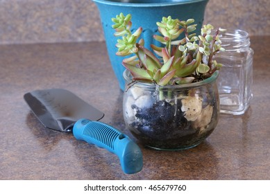 Succulent plants in a glass dish or terrarium. House, home and living concepts.