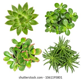 Succulent plants isolated on white background. Top view