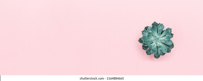 Succulent plants on color pastel paper background, top view, flat lay, facebook cover