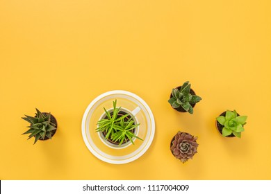 Succulent plants on joyful yellow background, with copy space.