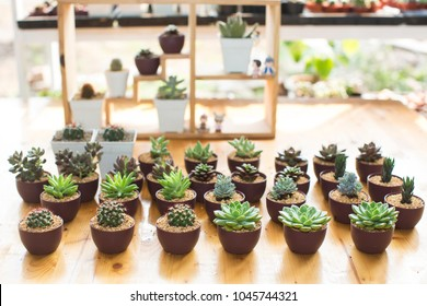 succulent plants on a table