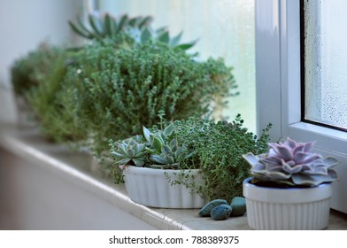 Succulent plants on a windowsill