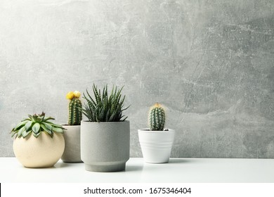 Succulent plants in pots against grey background. Houseplants - Shutterstock ID 1675346404