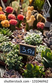 Succulent plants for sale at flowers market. Focus on euros price tag.