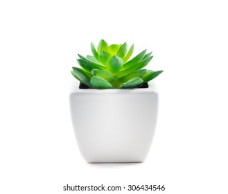 Succulent in Pot isolated on white background.