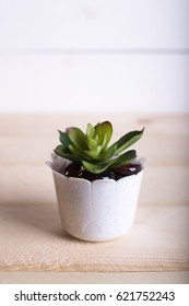 Succulent in pot wooden table background with copy space. minimalist composition. selective focus.