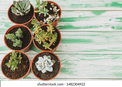 Succulent sprouts on green weathered wooden background top view