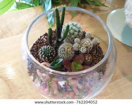 Succulent Terrarium Diy Stock Photo Edit Now 762204052 Shutterstock
