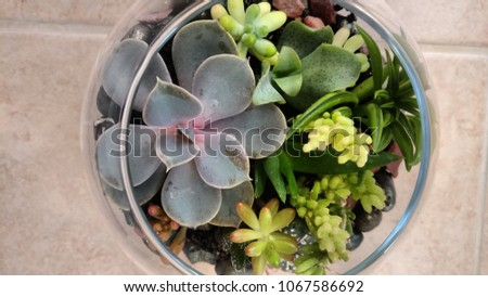 Succulent Terrarium Glass Bowl Stock Photo Edit Now 1067586692