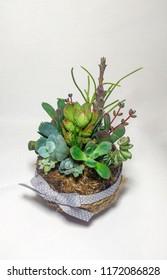 The succulent terrarium in a kokedama