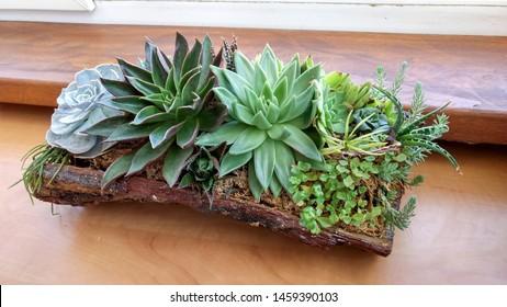 Succulent terrarium planted in a pine tree bark