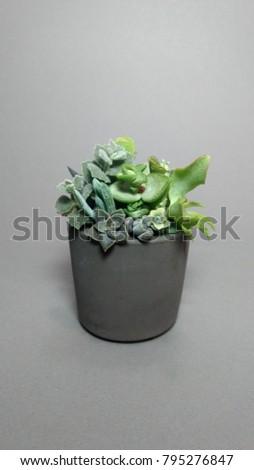 Succulent Terrarium Small Dark Grey Concrete Stock Photo Edit Now