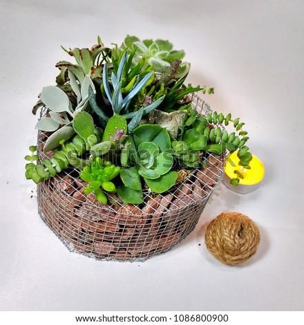 Succulent Terrarium Small Portable Handmade Decorative Stock Photo