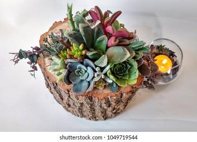 The succulent terrarium in a wooden pot