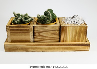 Succulent in wooden planter showing planting substrate with good drainage educational