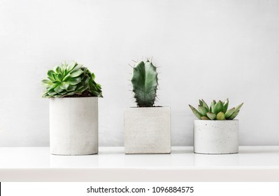 Succulents and cactus in a concrete pot on a white bedside table