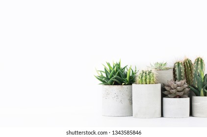 Succulents and cactus in a concrete pots on a white bedside table