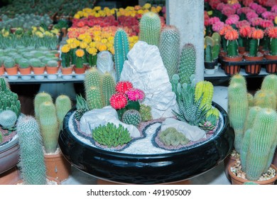 succulents or cactus in concrete pots. tray garden.Selective focus red point.