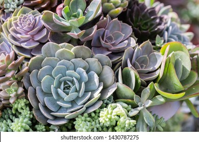 Succulents or cactus in desert botanical garden for decoration and agriculture design.