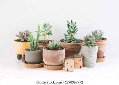 Succulents and Cactus in different clay pots on the white shelf. Scandinavian hipster home decoration.