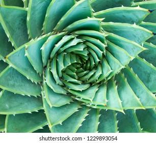 succulents or cactus succulents in garden