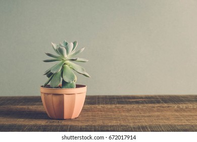succulents or cactus in pots with filter effect retro vintage style