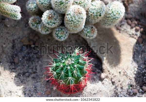 Succulents and cactuses. Soft focus.