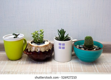 succulents in ceramic pots shooted with daylight