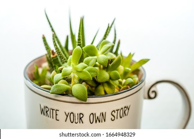 Succulents in a coffee mug. Write your own story.