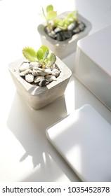 succulents in concrete pots. white style interior